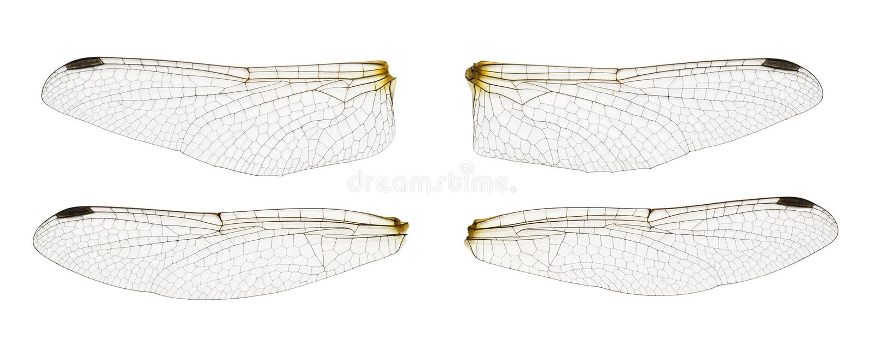 φτερά λιβελλουλών στοκ εικόνες