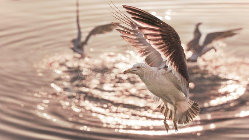 Φτερά νερού στοκ φωτογραφίες