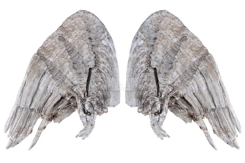 φτερά ξύλινα στοκ εικόνες