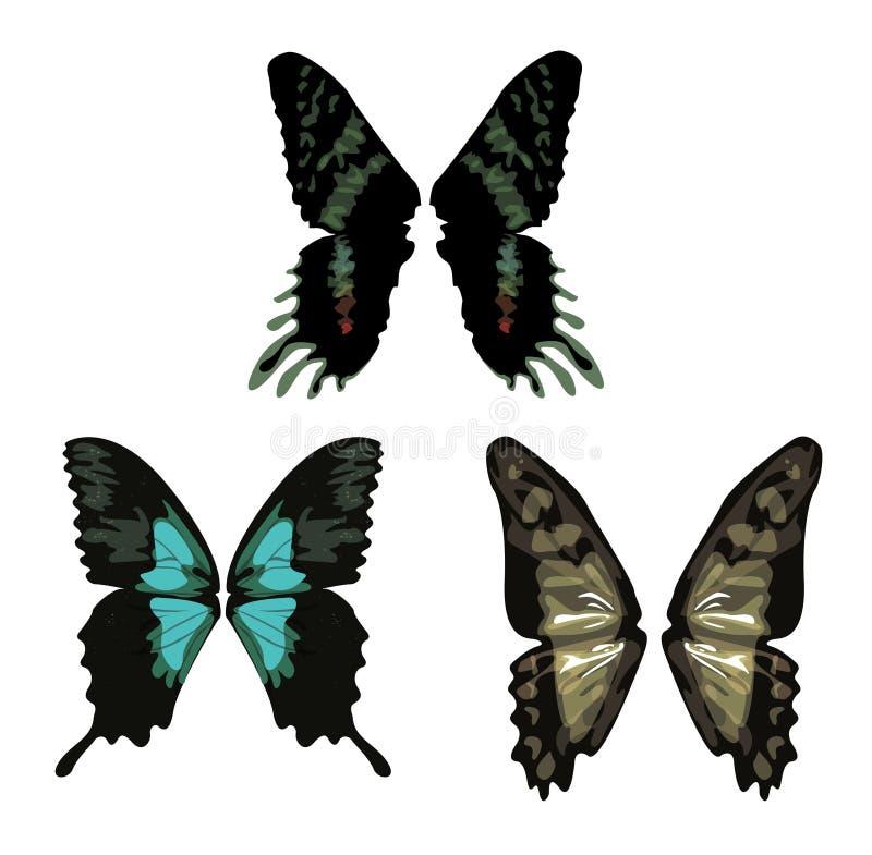 φτερά πεταλούδων στοκ εικόνα με δικαίωμα ελεύθερης χρήσης