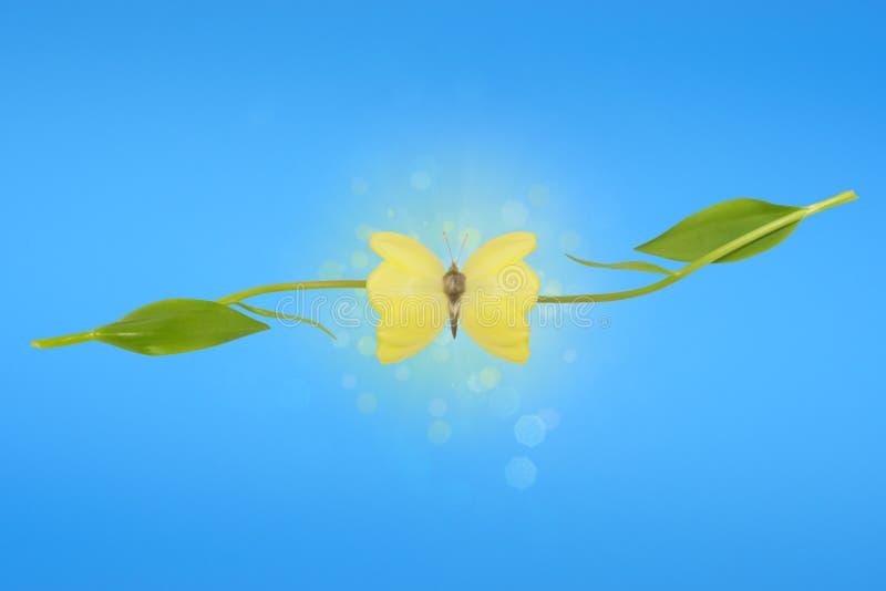 φτερά τουλιπών παραίσθησης πεταλούδων στοκ φωτογραφία
