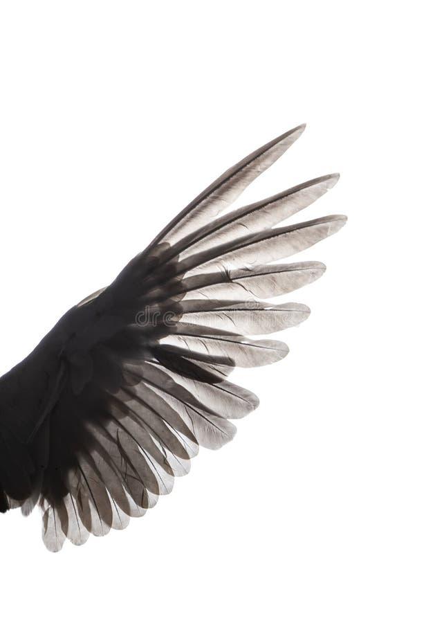 Φτερά του πουλιού στο άσπρο υπόβαθρο στοκ φωτογραφία με δικαίωμα ελεύθερης χρήσης