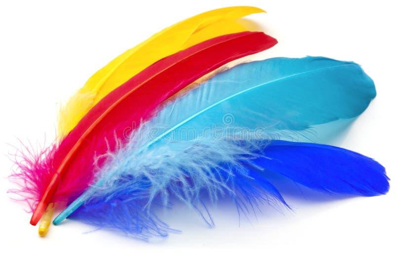 φτερά στοκ φωτογραφία με δικαίωμα ελεύθερης χρήσης