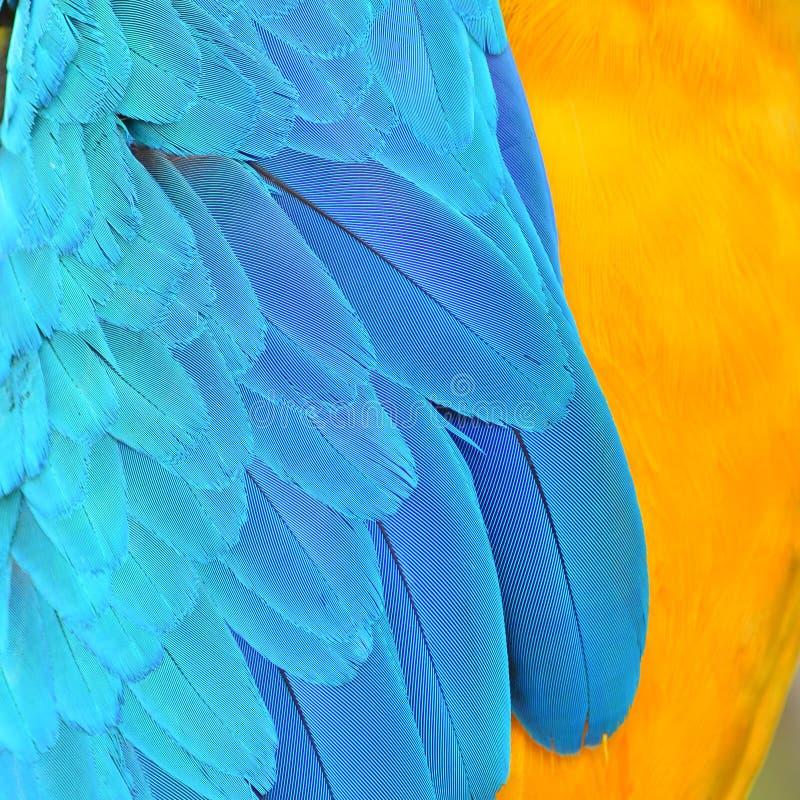 Φτερά Macaw Harlequin στοκ φωτογραφία με δικαίωμα ελεύθερης χρήσης