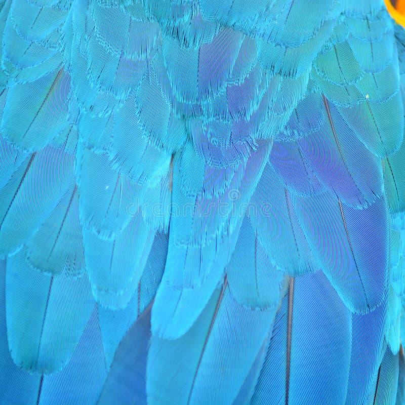 Φτερά Macaw Harlequin στοκ φωτογραφία