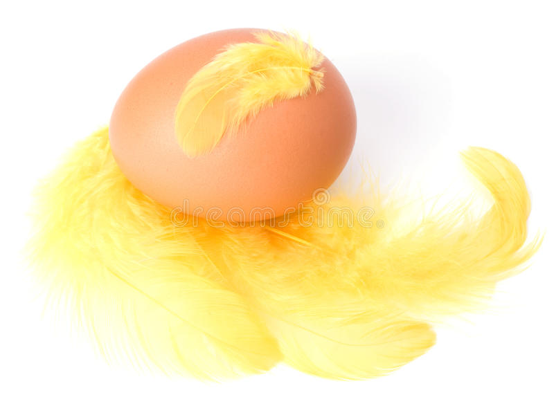 Download φτερό αυγών στοκ εικόνες. εικόνα από αγρόκτημα, ανασκόπησης - 13179602