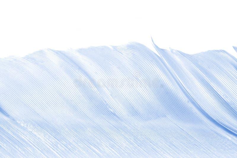 φτερό μαλακό στοκ φωτογραφία