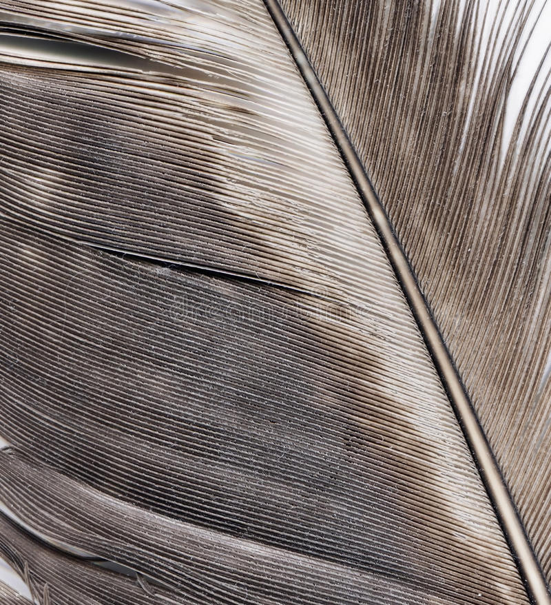 Download Φτερό μανδρών στοκ εικόνα. εικόνα από φτερό, μεγάλος - 62710153