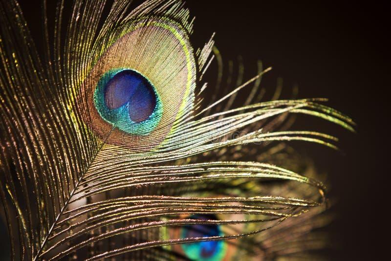 φτερό ματιών peacock στοκ φωτογραφία με δικαίωμα ελεύθερης χρήσης