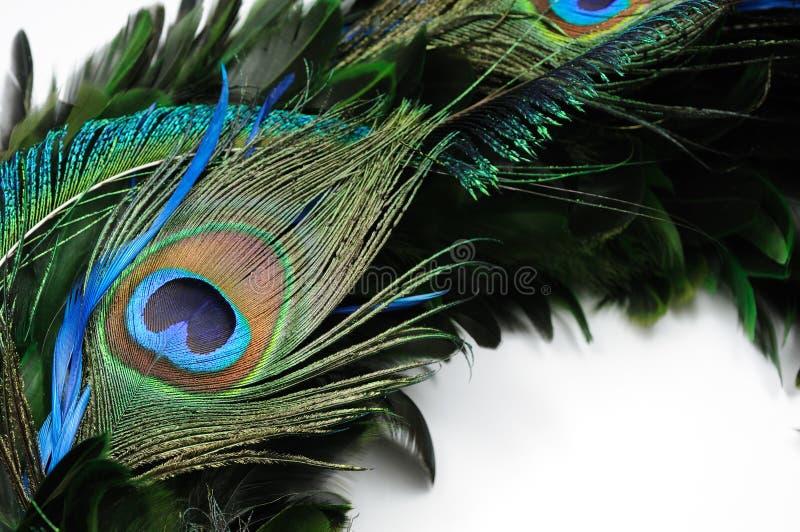 φτερό ματιών peacock στοκ εικόνες με δικαίωμα ελεύθερης χρήσης