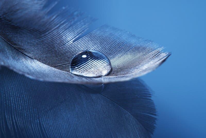 Φτερό με μια πτώση στοκ φωτογραφίες με δικαίωμα ελεύθερης χρήσης