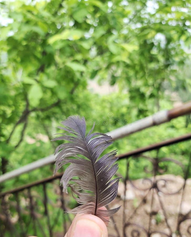 Φτερό πουλιών στοκ φωτογραφία