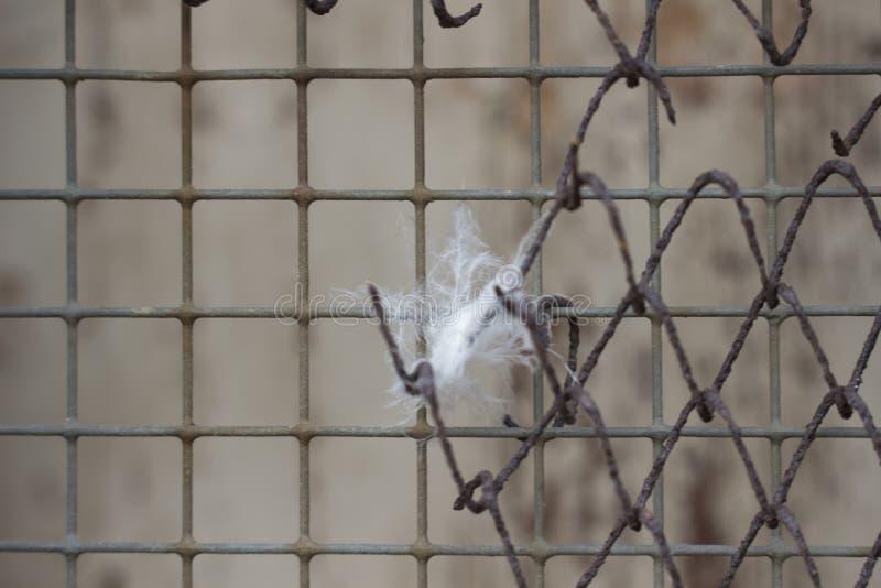 Φτερό σε καθαρό στοκ φωτογραφία με δικαίωμα ελεύθερης χρήσης