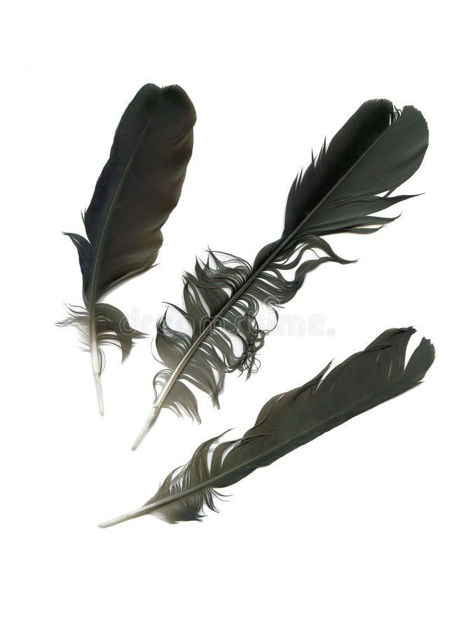φτερό τρία στοκ φωτογραφία με δικαίωμα ελεύθερης χρήσης