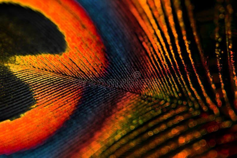 φτερό χρωμάτων στοκ φωτογραφίες με δικαίωμα ελεύθερης χρήσης