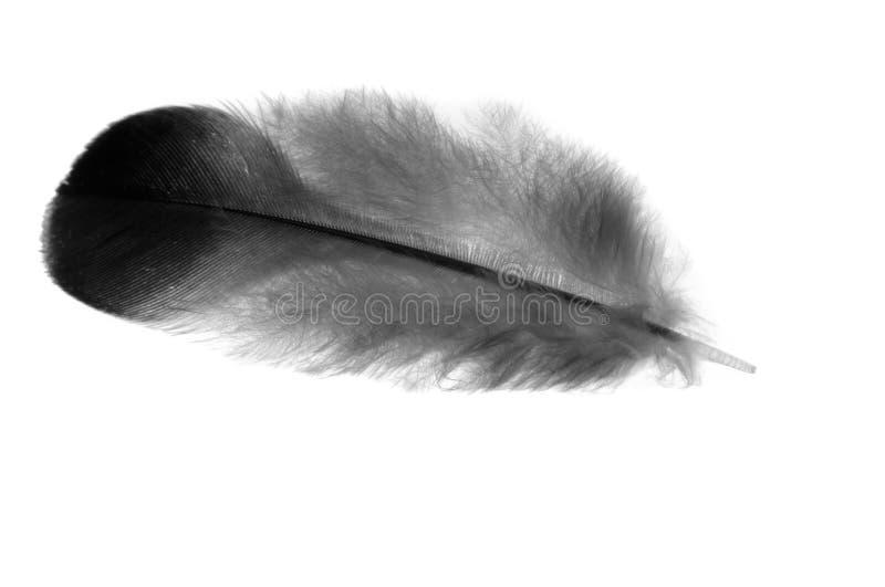 Φτερό. στοκ φωτογραφίες