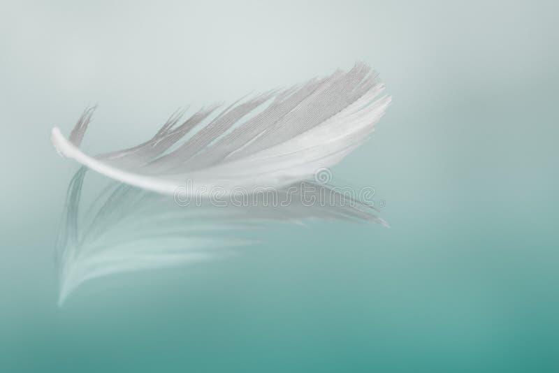 Φτερό στοκ φωτογραφίες με δικαίωμα ελεύθερης χρήσης