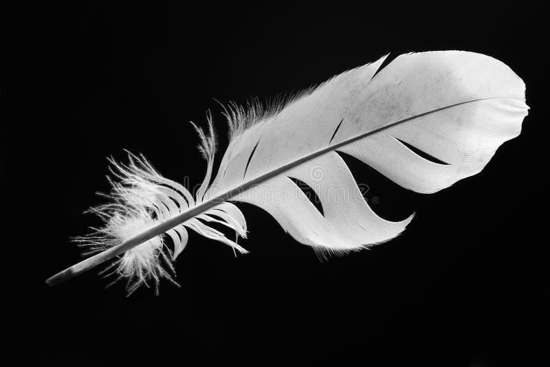 φτερό στοκ φωτογραφία