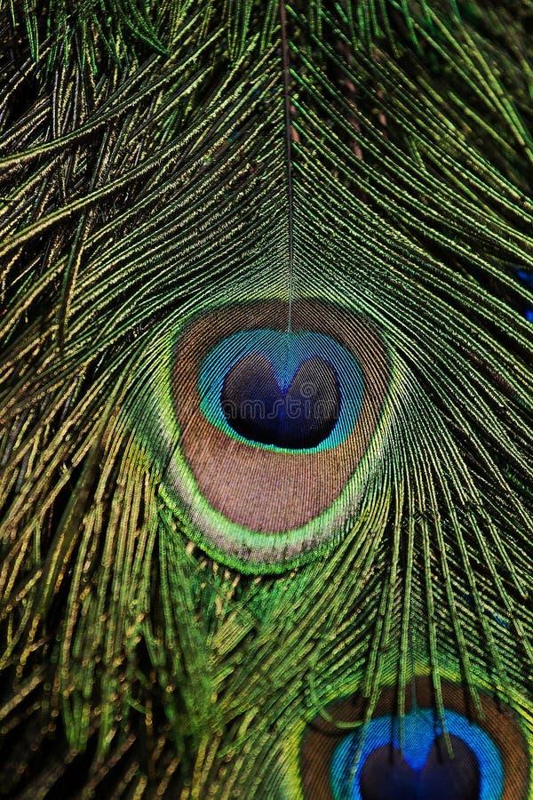 Φτερό Colourfull στοκ εικόνες