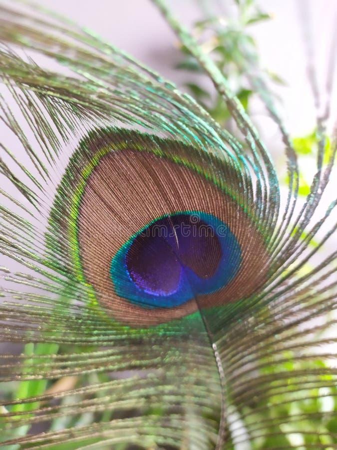 Φτερό Peacock στη μακροεντολή στοκ εικόνες με δικαίωμα ελεύθερης χρήσης