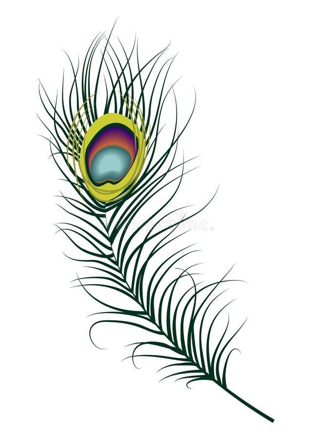 Φτερό Peacock ελεύθερη απεικόνιση δικαιώματος