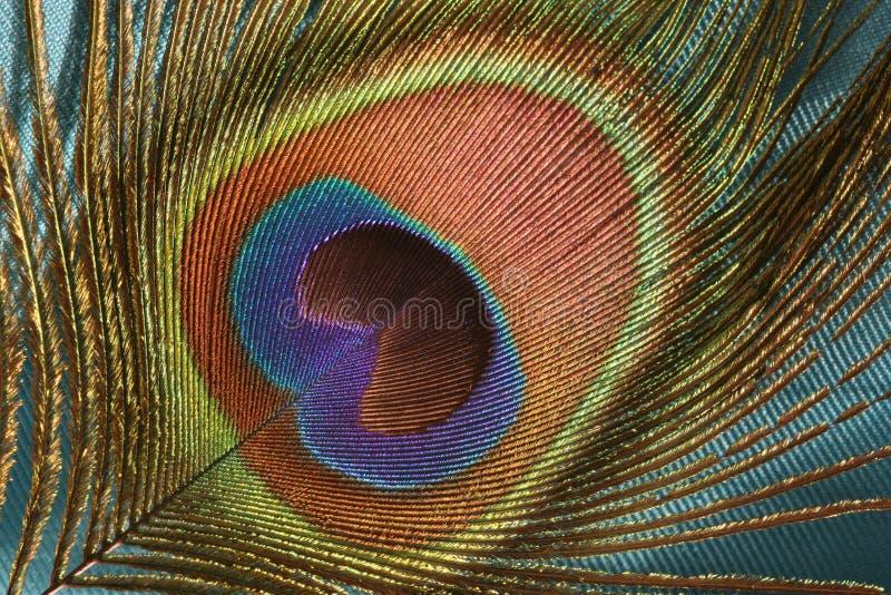 Φτερό Peacock Δωρεάν Στοκ Φωτογραφία