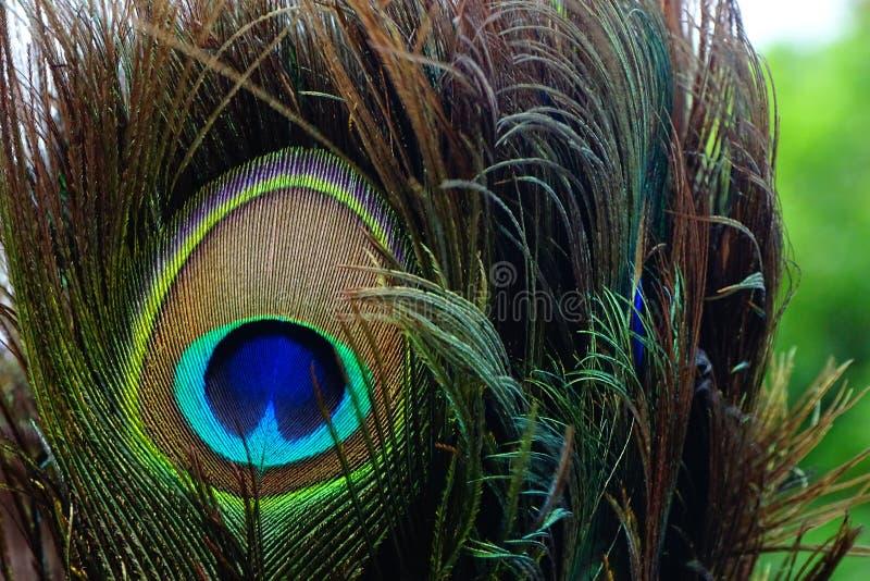Φτερό Peacock στοκ φωτογραφία με δικαίωμα ελεύθερης χρήσης