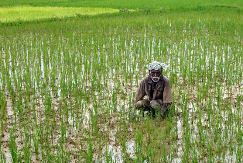 Φτωχός αγρότης στοκ φωτογραφίες