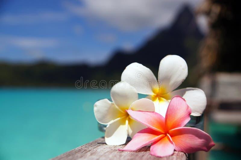 Φυγή Bora Bora στοκ φωτογραφία