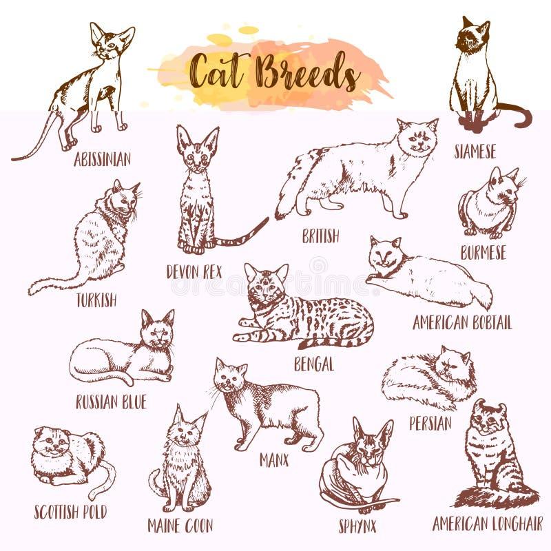 Φυλή γατών και σύνολο εικονιδίων προσοχής κτηνιάτρων Συρμένοι χέρι τύποι γατών Σκίτσο του γατακιού Μαίην coon, μανξιανά, σιαμέζα  απεικόνιση αποθεμάτων