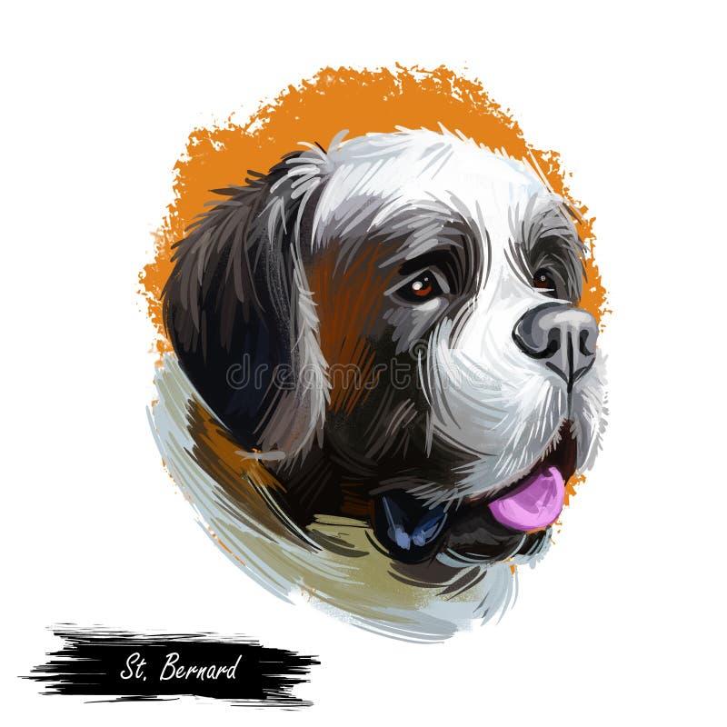 Φυλή του ST Bernard του μεγάλου εργαζόμενου σκυλιού από τις δυτικές Άλπεις που απομονώνεται στο λευκό r Ζωική κινηματογράφηση σε  απεικόνιση αποθεμάτων