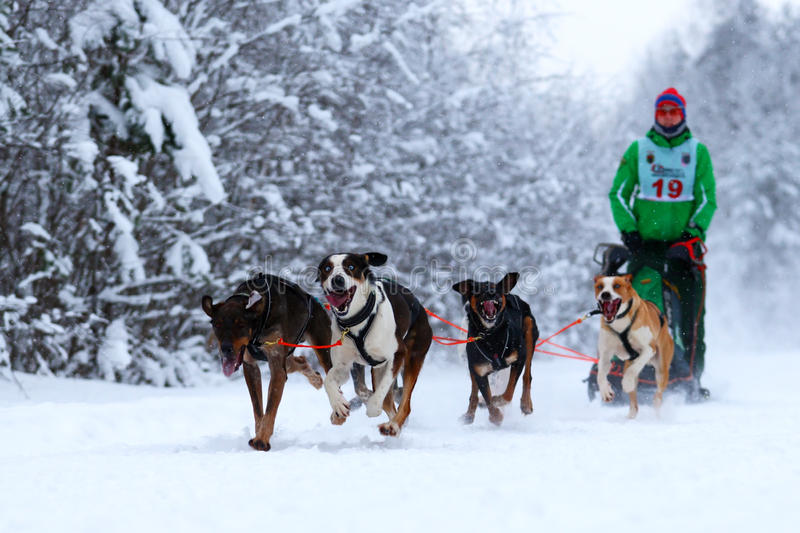 Φυλή των σκυλιών σχεδίων στοκ εικόνα με δικαίωμα ελεύθερης χρήσης