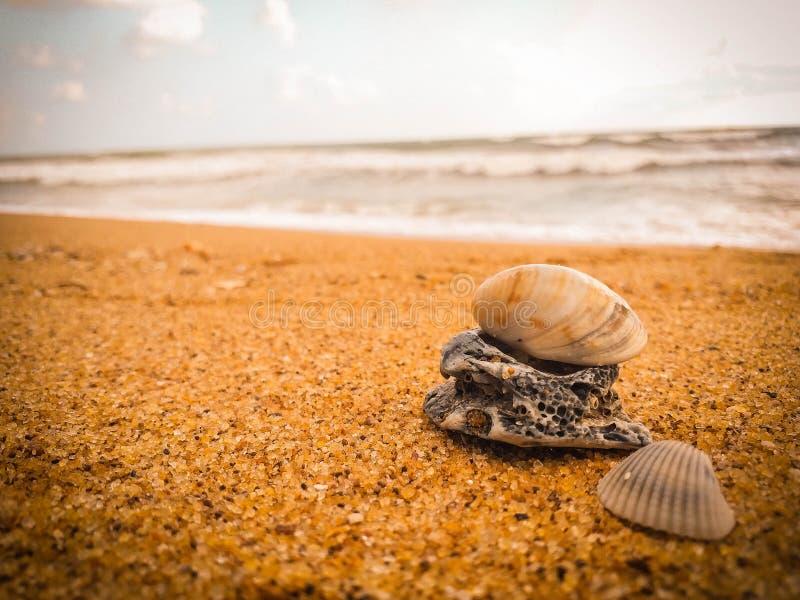 Φυσικά θαλασσινά κοχύλια στην παραλία στοκ εικόνες
