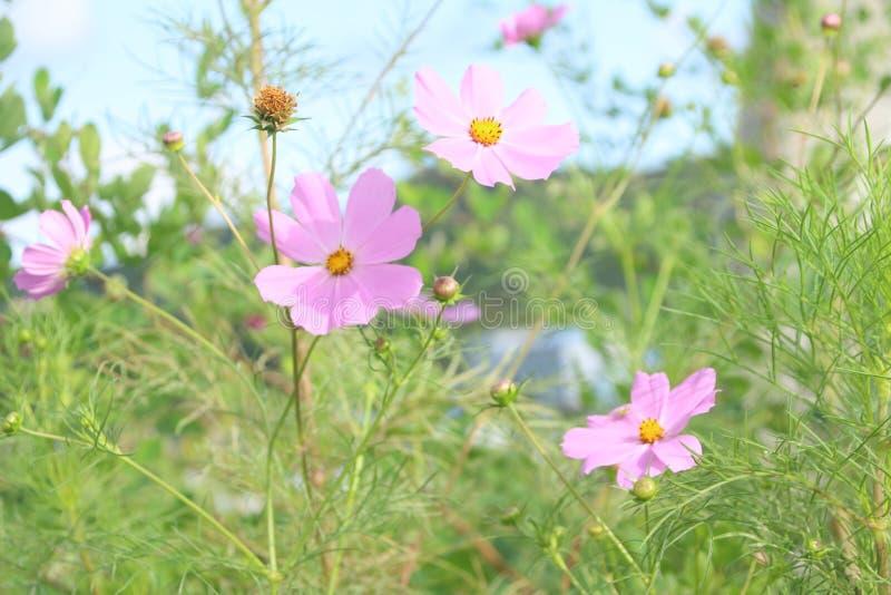 Φυσικά λουλούδια στοκ εικόνα