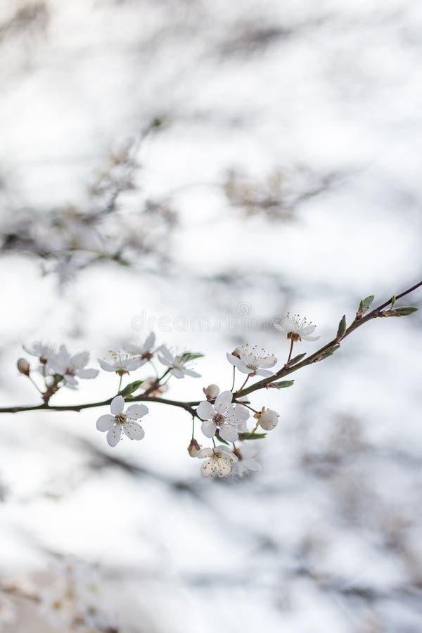 Φυσικά λουλούδια στοκ φωτογραφία
