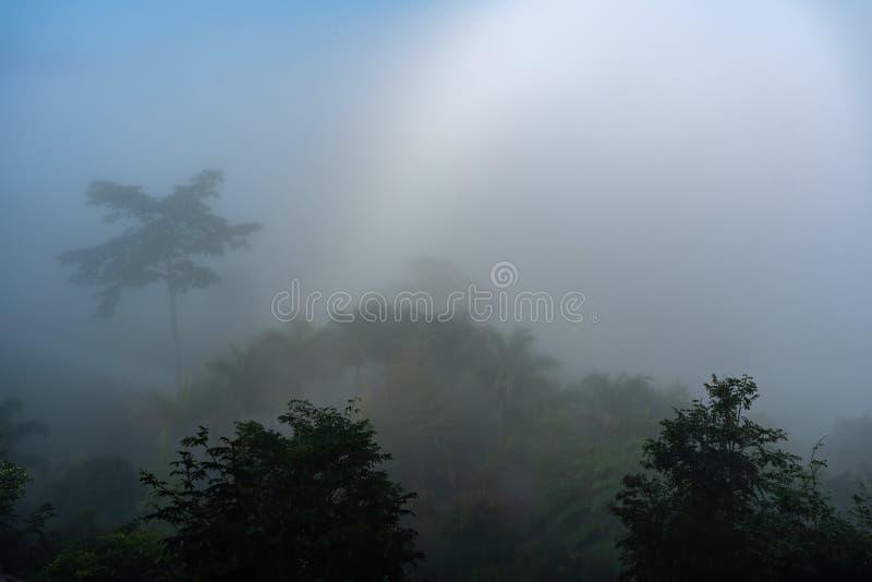 Φυσικά φαινόμενα Το Fogbow ή το λευκό ουράνιο τόξο εμφανίζεται πάνω από την ομίχλη στοκ φωτογραφία