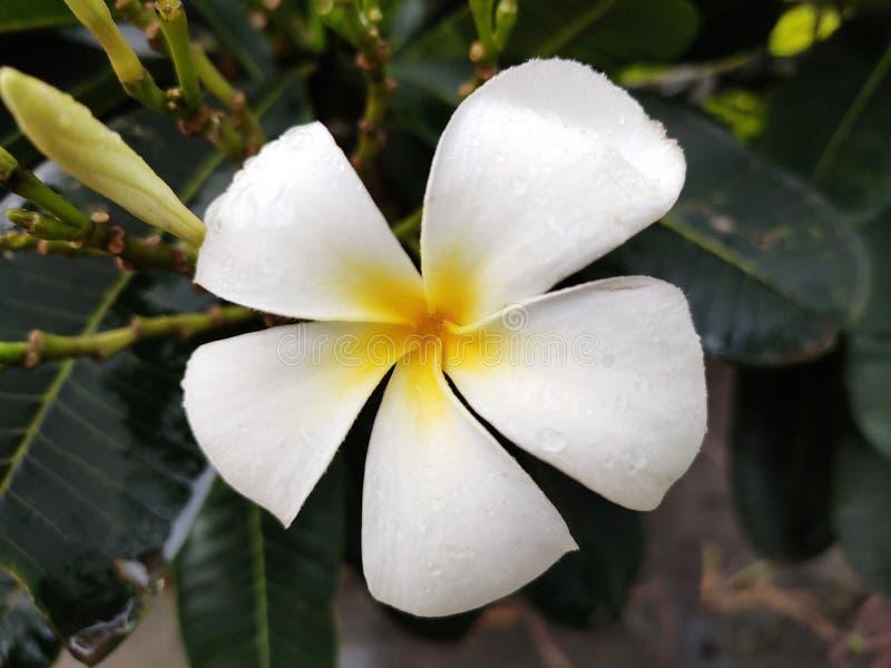 Φυσικά φρέσκο όμορφο λαμπρό χρυσό λουλούδι στοκ εικόνες με δικαίωμα ελεύθερης χρήσης
