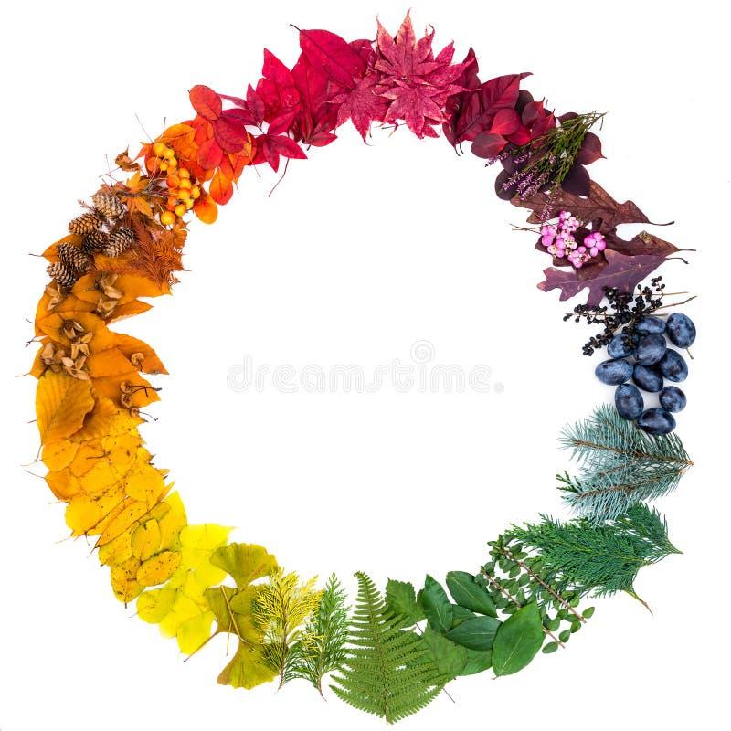 Φυσικά φύλλα που τακτοποιούνται ως ζωηρόχρωμος κύκλος Χρώματα του φθινοπώρου στοκ εικόνες