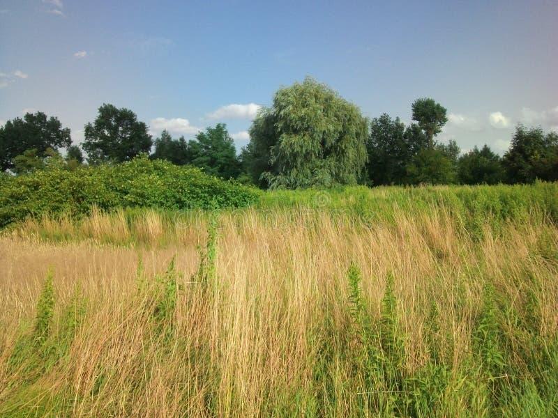 Φυσικά χλόη και δέντρα με το μπλε ουρανό στοκ φωτογραφία με δικαίωμα ελεύθερης χρήσης