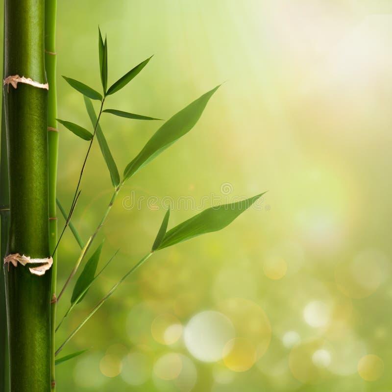 Φυσικές ανασκοπήσεις zen