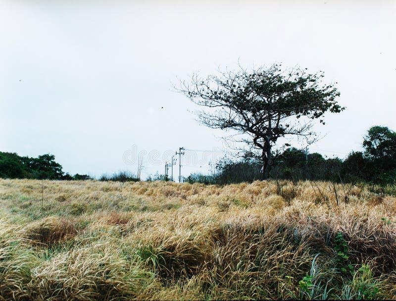 Φυσική άποψη της ξηρών χλόης και του δέντρου στοκ φωτογραφίες