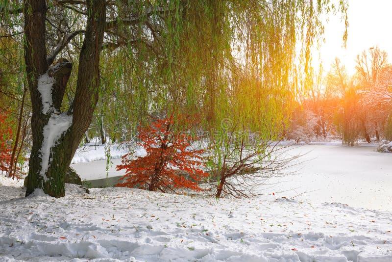 Φυσική άποψη της παγωμένης λίμνης με το δέντρο ιτιών και το πρώτο χιόνι στοκ φωτογραφία με δικαίωμα ελεύθερης χρήσης