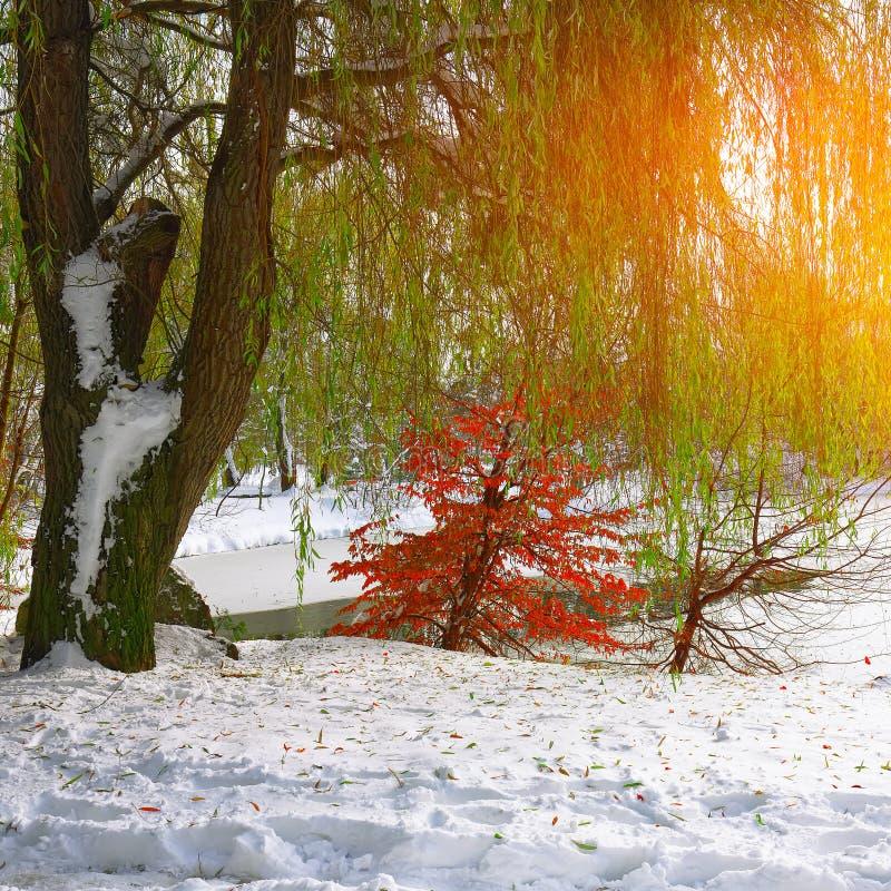 Φυσική άποψη της παγωμένης λίμνης με το δέντρο ιτιών και το πρώτο χιόνι στοκ εικόνα με δικαίωμα ελεύθερης χρήσης