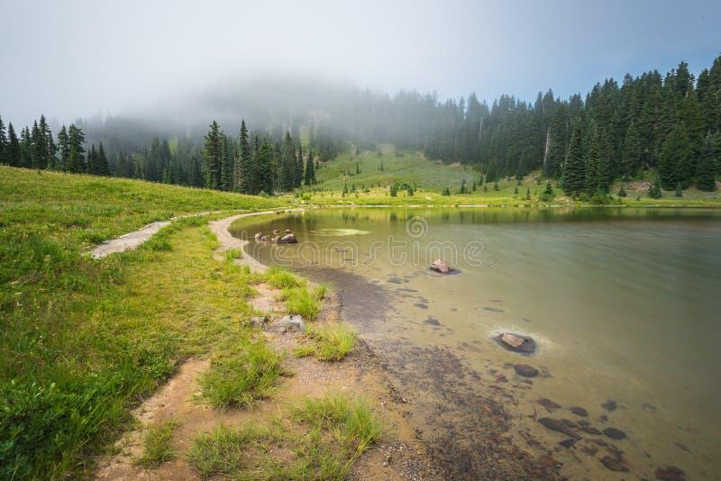 Φυσική άποψη του δάσους, του λιβαδιού και της λίμνης με την ομίχλη την ημέρα στη λίμνη Tipzoo, ΑΜ πιό βροχερή, Ουάσιγκτον, ΗΠΑ στοκ φωτογραφίες με δικαίωμα ελεύθερης χρήσης