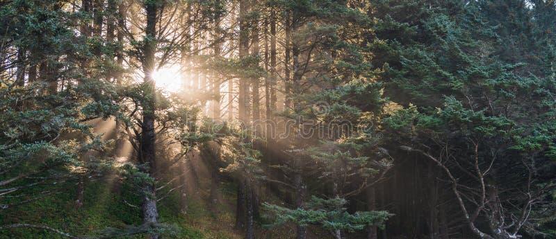 Φυσική άποψη του δέντρου με το ελαφρύ, εκλεκτής ποιότητας ύφος ηλιοβασιλέματος στοκ φωτογραφία με δικαίωμα ελεύθερης χρήσης