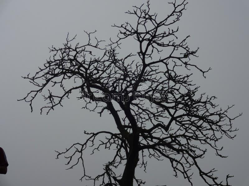 Φυσική άποψη του δέντρου με το ομιχλώδες υπόβαθρο στοκ φωτογραφίες με δικαίωμα ελεύθερης χρήσης