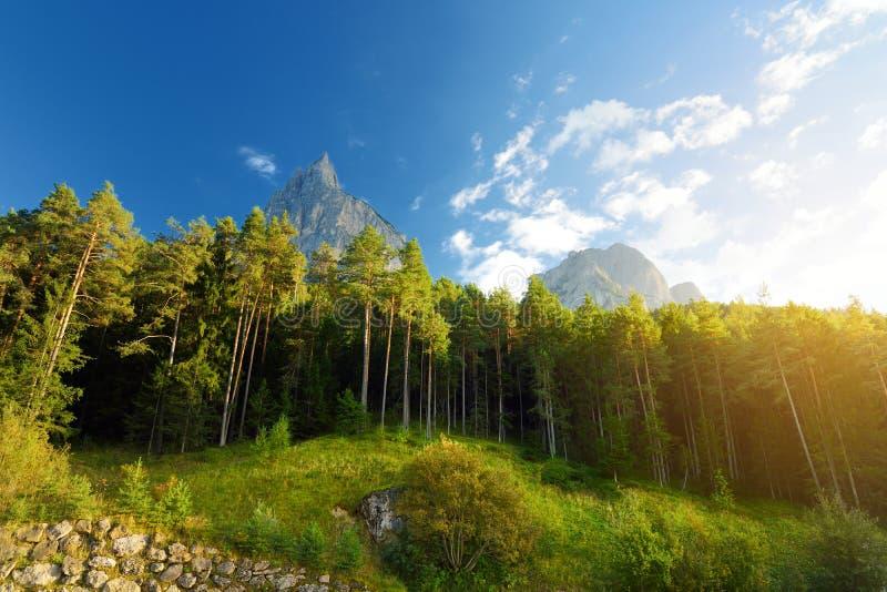 Φυσική άποψη του μικτών πεύκου και του αποβαλλόμενου δάσους στο νότιο Τύρολο, περιοχή Renon/Ritten, της Ιταλίας στοκ εικόνες