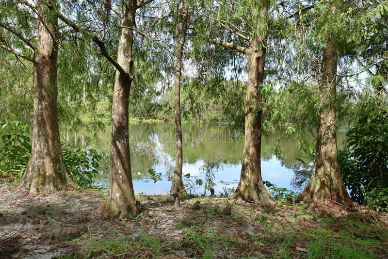 Φυσική άποψη των κήπων φλαμίγκο στη νότια Φλώριδα, ΗΠΑ στοκ φωτογραφία με δικαίωμα ελεύθερης χρήσης