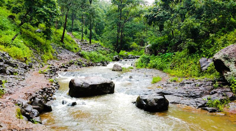 Φυσική άποψη των ροών ποταμών narmada μέσω των άγρια περιοχών στοκ φωτογραφία