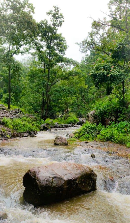 Φυσική άποψη των ροών ποταμών narmada μέσω των άγρια περιοχών στοκ εικόνες